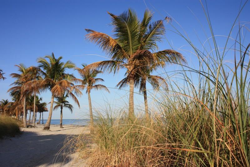 Miami etnica