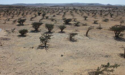 Dhofar, terra dell'incenso